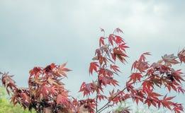 Acero rosso decorativo sui precedenti del cielo Fotografie Stock