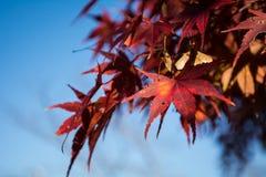 Acero rosso sul cielo Immagini Stock Libere da Diritti