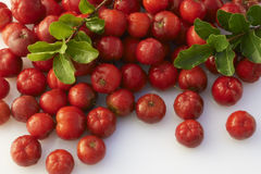 Acerola Stock Photography