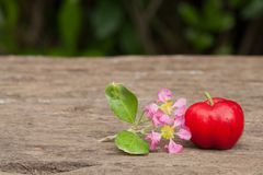 Acerola cherry of thailand on wood. Select focus, Barbados cherr. Acerola cherry and flower of thailand on wood. Select focus, Barbados cherry, Malpighia Stock Photos