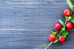 Acerola cherry Stock Photos