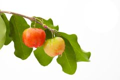 Acerola cherry of thailand, White background, Select focus, Barb. Ados cherry Stock Photo