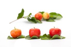 Acerola cherry of thailand, White background, Select focus, Barb. Ados cherry Royalty Free Stock Photo
