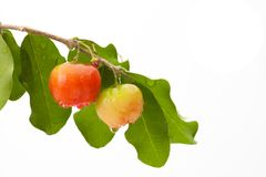 Acerola cherry of thailand, White background, Select focus, Barb. Ados cherry Stock Image