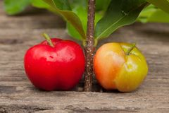 Acerola cherry of thailand on wood. Select focus, Barbados cherr. Y, Malpighia emarginata, high vitamin Stock Photo
