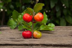 Acerola cherry of thailand on wood. Select focus, Barbados cherr. Y, Malpighia emarginata, high vitamin Royalty Free Stock Photos