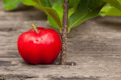 Acerola cherry of thailand on wood. Select focus, Barbados cherr. Y, Malpighia emarginata, high vitamin Stock Photos