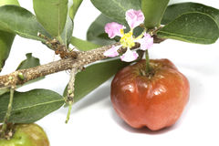 Acerola fruit isolated. On the white background Royalty Free Stock Photo