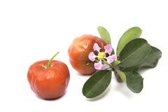 Acerola fruit isolated Royalty Free Stock Images
