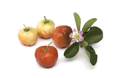 Acerola fruit isolated Stock Images