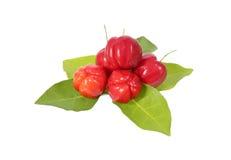Acerolafrucht Stockfoto
