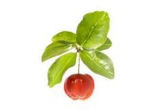 Acerolafrucht Lizenzfreie Stockbilder