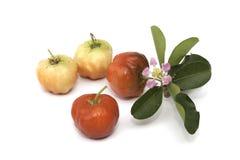 Acerolafrucht lokalisiert Stockbilder