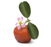 Acerolafrucht lokalisiert Stockbild