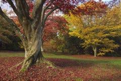 Acers и клены galore Стоковая Фотография