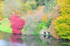 Acers et lac en automne - jardin de Stourhead photos libres de droits