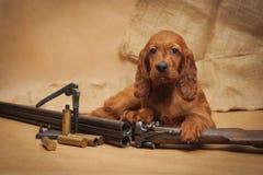 Acessórios do cachorrinho e da caça Imagem de Stock Royalty Free
