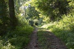 Acess väg i skogen fotografering för bildbyråer