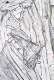 Acetaminophen unter dem Mikroskop Stockfoto