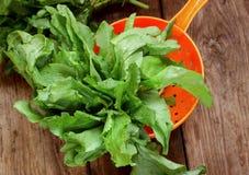 Acetosa fresca in filtro Fotografia Stock