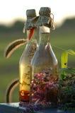 Acetum dell'erba Fotografia Stock Libera da Diritti