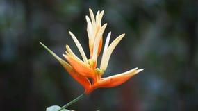 Achado da flor selvagem em um rio Imagens de Stock Royalty Free
