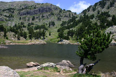 Achard Lake. And a tree, in the mountain massif of Chamrousse, in the middle of the chaine of Belledonne in the French Alps Royalty Free Stock Image