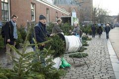 Achat d'un arbre de Noël sur le marché Photos libres de droits
