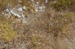 Achatina-Schnecke auf weißem Hintergrund Achatina-immaculata Stockbilder
