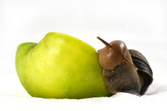 Achatina snail eats an apple. Achatina snail eats a big green apple in front of a white background Stock Photos