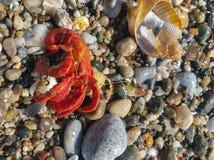 Achats à domicile de crabe Photos stock