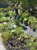 Achats de femme pour de nouvelles plantes et fleurs au jardinage et au vendeur extérieur d'usines image stock