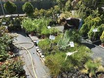 Achats de femme pour de nouvelles plantes et fleurs au jardinage et au vendeur ext?rieur d'usines photo libre de droits