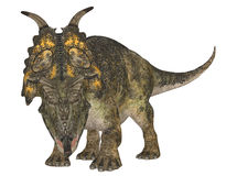 Achelousaurus Stock Photo