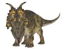 achelousaurus 库存照片