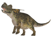 Achelousaurus Royalty Free Stock Photography