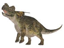 achelousaurus 免版税图库摄影
