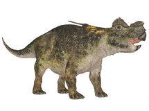 achelousaurus 免版税库存图片