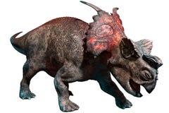 Achelousaurus stock illustrationer