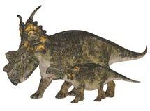 Achelousaurus adulto e novo Fotos de Stock Royalty Free