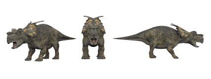 Achelousaurus Isolado do dinossauro no branco ilustração stock