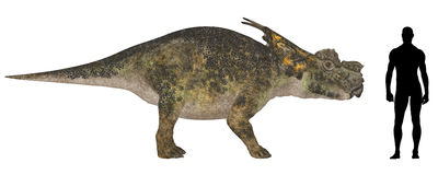 Achelousaurus Size Comparison Royalty Free Stock Image