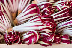 Achicoria fresca en el mercado Foto de archivo libre de regalías