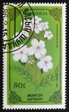 Achilea-millefolium oder Schafgarbe, Reihe widmeten sich Blumen, circa 1986 Lizenzfreies Stockbild