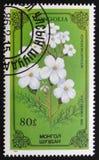 Achilea millefolium or thousand-leaf, series devoted to flowers, circa 1986 Royalty Free Stock Image