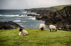 Achill head in county Mayo on the west coast of Ireland Royalty Free Stock Photography