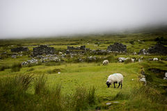 Achill island deserted village in fog. Deserted village on Achill Island, The Deserted Village at Slievemore consists of some 80 - 100 stone cottages located Stock Photos