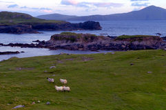 Achill-Küstenlinie Lizenzfreie Stockfotos