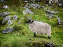 Achill-Kopf in der Grafschaft Mayo auf der Westküste von Irland Stockfoto