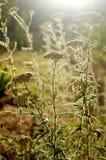 Achillea flowers. A few achillea flowers in sunlight stock image